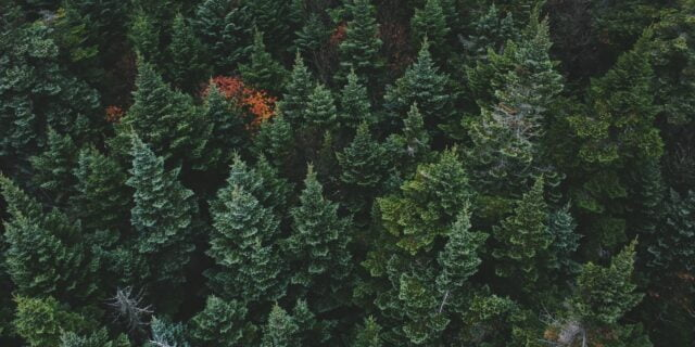Reasons To Create Evergreen Content